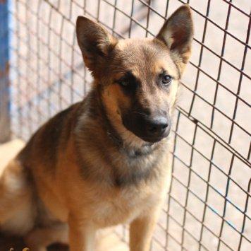 Эми Искра - Собаки в добрые руки