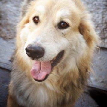 Вереск - Собаки в добрые руки