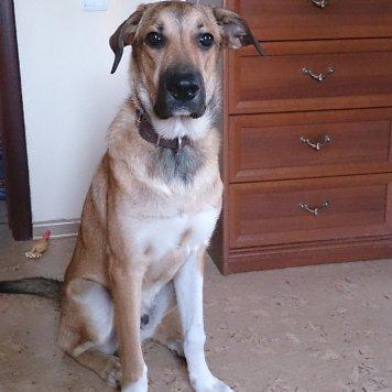 Шаньти - Собаки в добрые руки