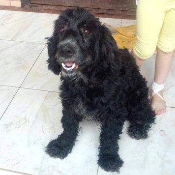 Кобель спаниель - Собаки в добрые руки