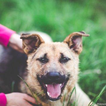 Лорд - Собаки в добрые руки