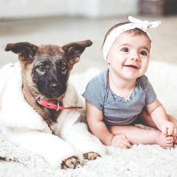 Джуси - Собаки в добрые руки