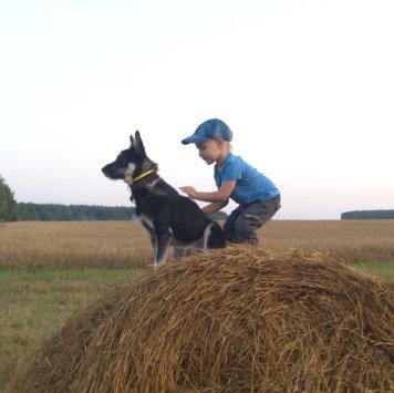 Гонщик - Собаки в добрые руки