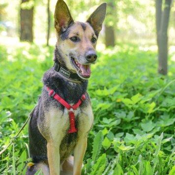 Гайка - Собаки в добрые руки
