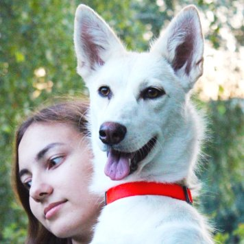 Айта - Собаки в добрые руки