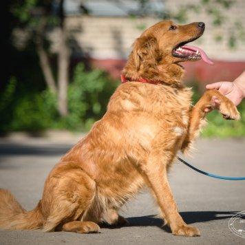 Апельсин - Собаки в добрые руки