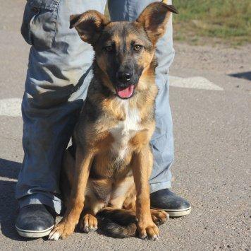 Очаровательная Келли - Собаки в добрые руки