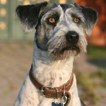 Эшли - Собаки в добрые руки