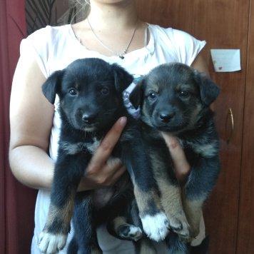 Арчи и Бэти - Собаки в добрые руки