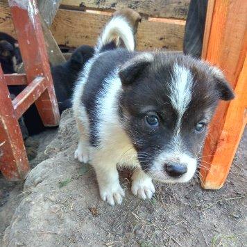 Бимон - Собаки в добрые руки