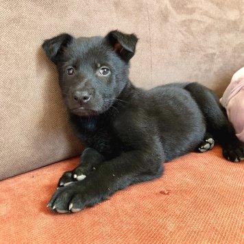 Брюс - Собаки в добрые руки