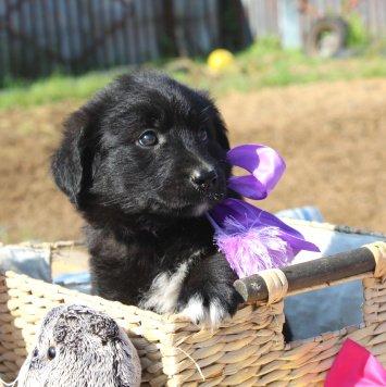 Кари - Собаки в добрые руки