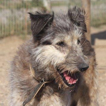 Бородатик Линда - Собаки в добрые руки