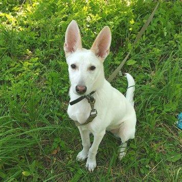 Дульсинея - Собаки в добрые руки