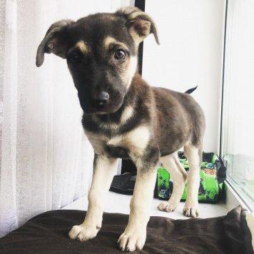 Красотка Берта - Собаки в добрые руки