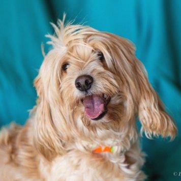 Берта - Найденные собаки