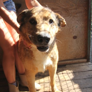 Брутальный Акелла - Собаки в добрые руки
