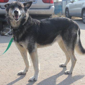 Спокойная Ася - Собаки в добрые руки