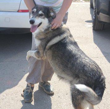 Нежная Лукаша - Собаки в добрые руки
