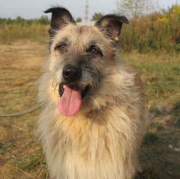 Бородач Кузя - Собаки в добрые руки