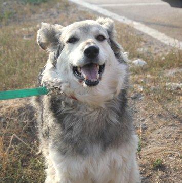 Кудряшка Лана - Собаки в добрые руки