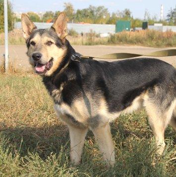 Комиссар Рекс - Собаки в добрые руки