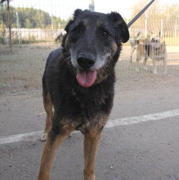 Муслим Магомаев - Собаки в добрые руки
