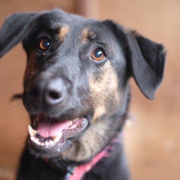 Умница Верона - Собаки в добрые руки