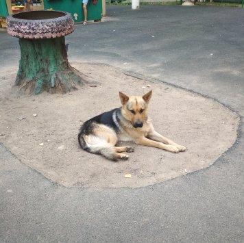 Нет - Найденные собаки