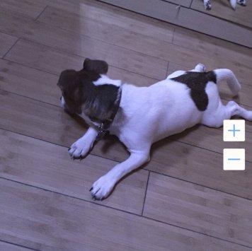 Винс - Собаки в добрые руки