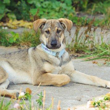 Юта и Дакота - Собаки в добрые руки