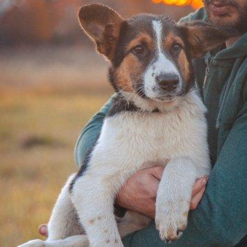 Бармалей - Собаки в добрые руки