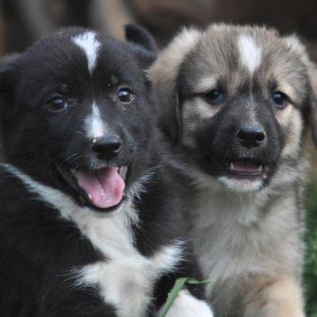 Звездочка и Арчи - Собаки в добрые руки