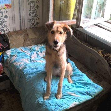 Джуся - Собаки в добрые руки