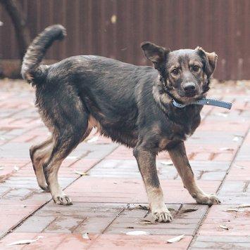 Лукас - Собаки в добрые руки