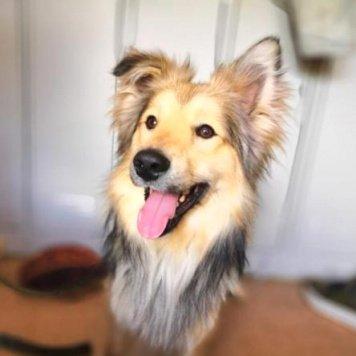 Орландо - Собаки в добрые руки
