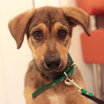 Шаттл - Собаки в добрые руки