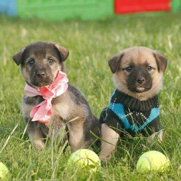 Щеночки-колобочки - Собаки в добрые руки