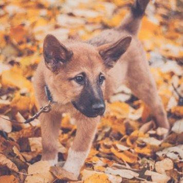 Чендлер - Собаки в добрые руки
