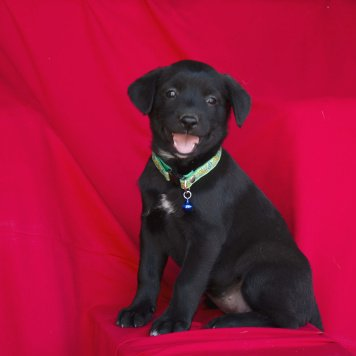 Блейки - Собаки в добрые руки