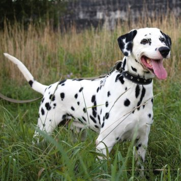 Химик - Собаки в добрые руки