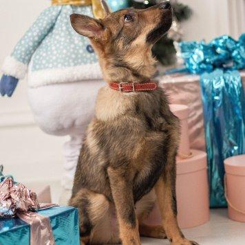 Рокфор - Собаки в добрые руки