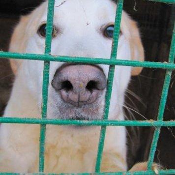 Султан - Собаки в добрые руки