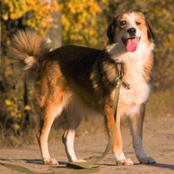 Софико - Собаки в добрые руки