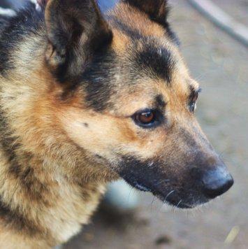 Мирген - Собаки в добрые руки