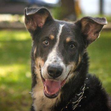 Чаппи - Собаки в добрые руки