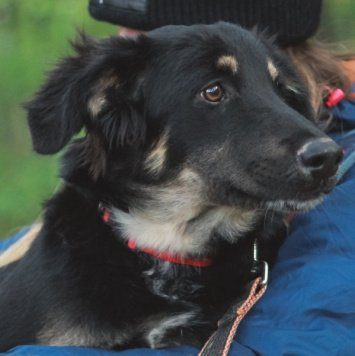 Кэсси - Найденные собаки