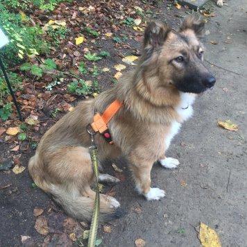 Лиса-Красотка - Собаки в добрые руки