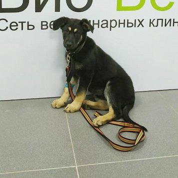 Полина - Найденные собаки