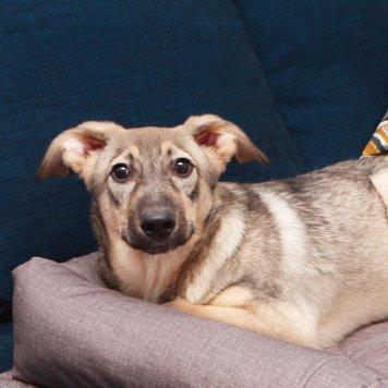 Щенок Нора - Собаки в добрые руки